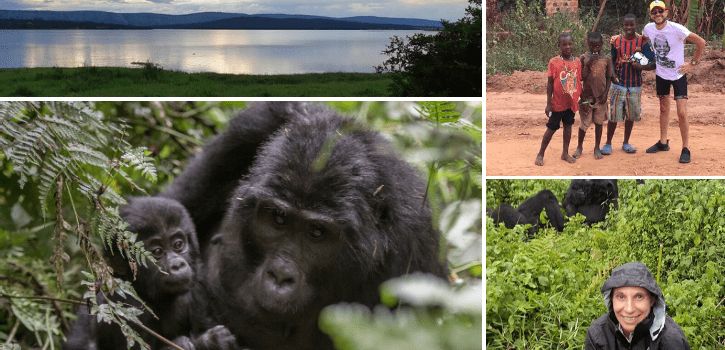 Gorilla trekking in Uganda and Rwanda: Which is better?
