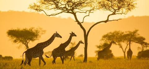 Tanzania & Rwanda: Game Parks & Gorillas