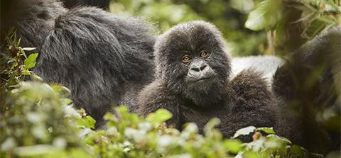 Best of Africa – Primates & Savannah