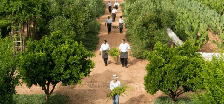 More than just a Wine Farm – Babylonstoren