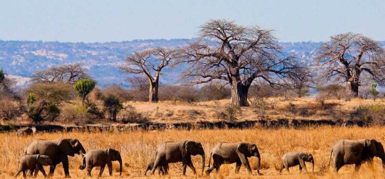 Tanzania & Rwanda Honeymoon