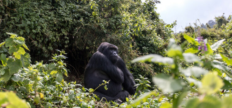 Our Rwanda Holiday: The Land of a Thousand Smiles
