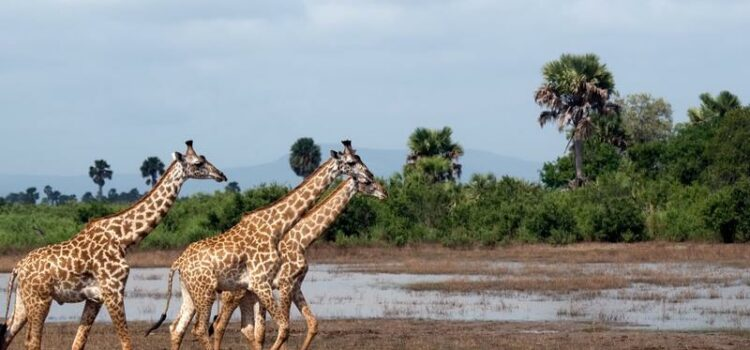 12 Night East Africa & Island Adventure in Tanzania & Maldives